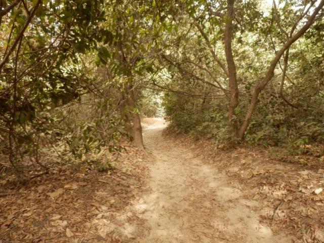Ein Weg im Abuko Nationalpark