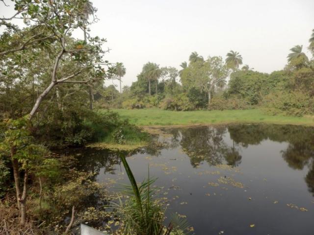 Krokodilteich im Abuko Nationalpark