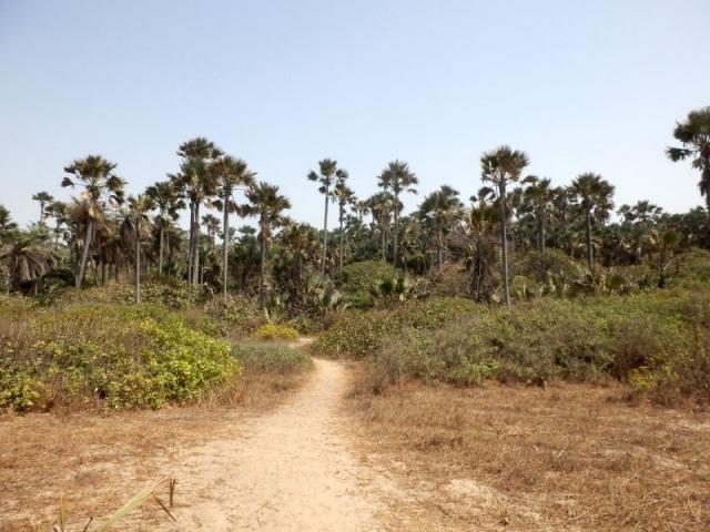 Bijilo Forest Park