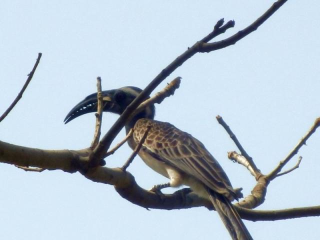 Vogel im Bijilo Forest Park