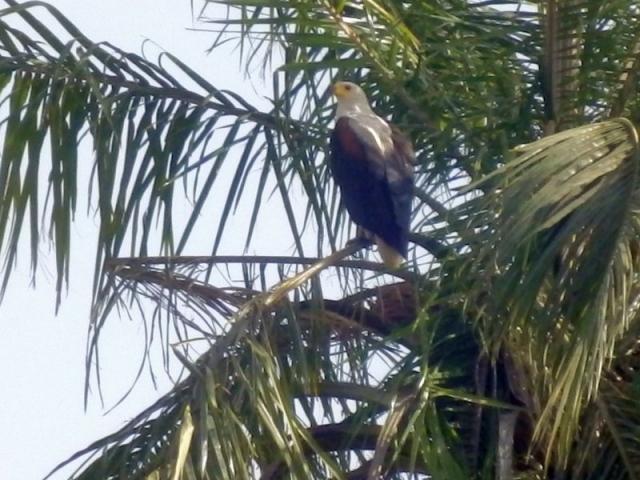 Vogel auf dem Gambia River