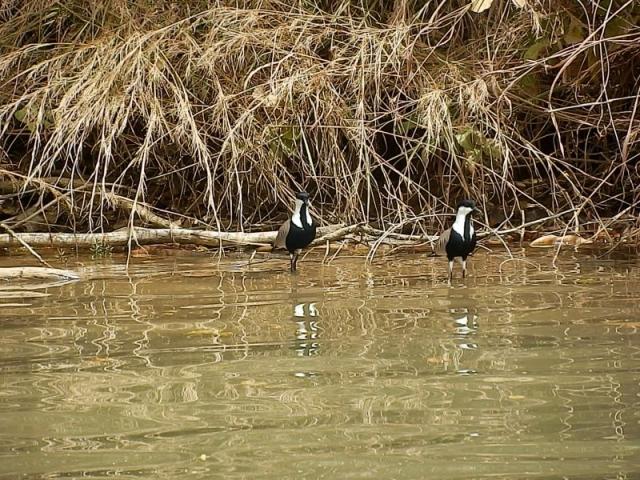 Vögel auf dem Gambia River