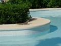 Varan am Pool