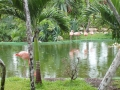 Hotel Teich mit Flamingos