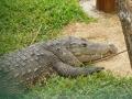Krokodile gab es hier auch
