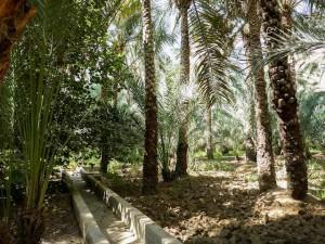 Abu-Dhabi-Al-Ain-Oase-03