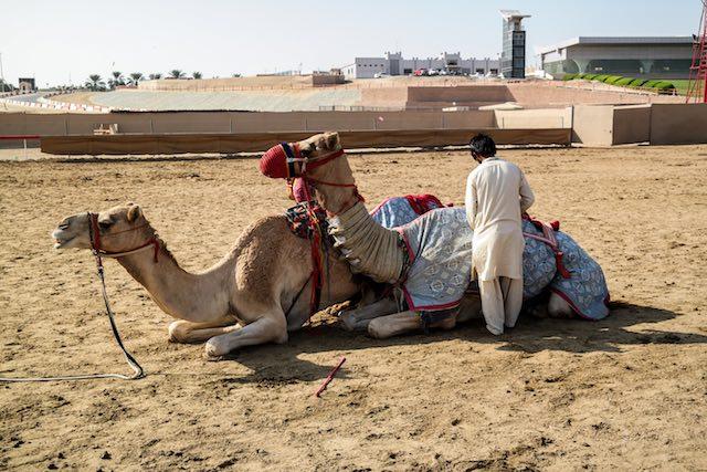 Abu-Dhabi-Camel-Race-Track-02