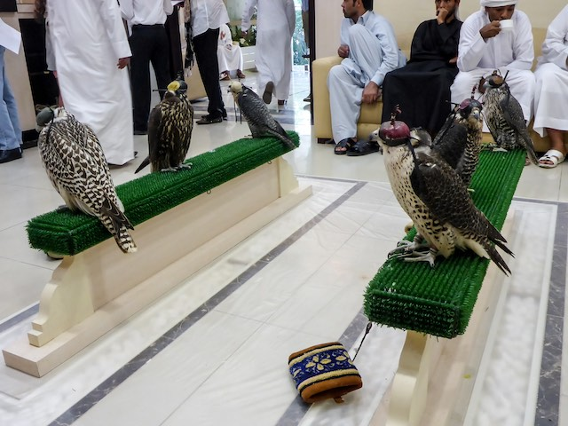 Abu-Dhabi-Falcon-Klinik-03
