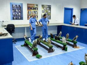Abu-Dhabi-Falcon-Klinik-05