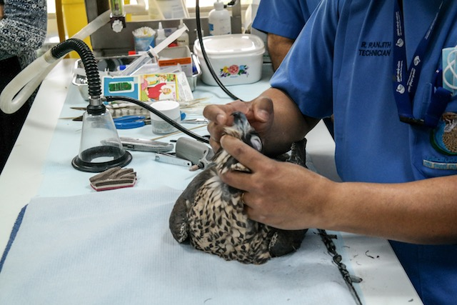 Abu-Dhabi-Falcon-Klinik-08