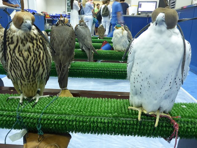 Abu-Dhabi-Falcon-Klinik-14