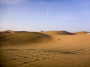 Abu-Dhabi-Half-Day-Safari-03