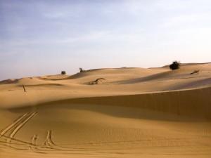 Abu-Dhabi-Half-Day-Safari-04