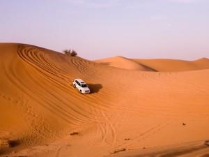Abu-Dhabi-Half-Day-Safari-06