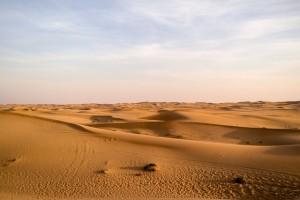 Abu-Dhabi-Half-Day-Safari-10