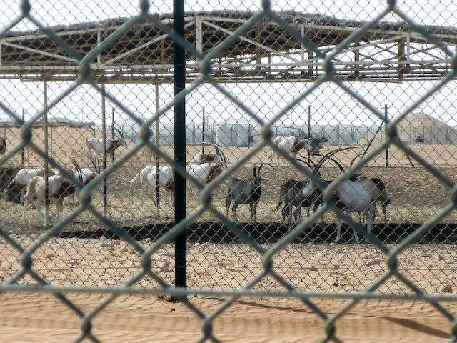 Abu-Dhabi-Qnyx-Farm