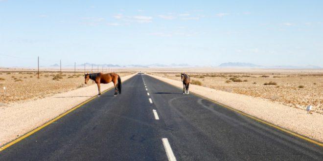 Aus-Luederitz-Wild-Horse-02