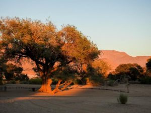Brandberg-Mowani-Mountain-Camp-01