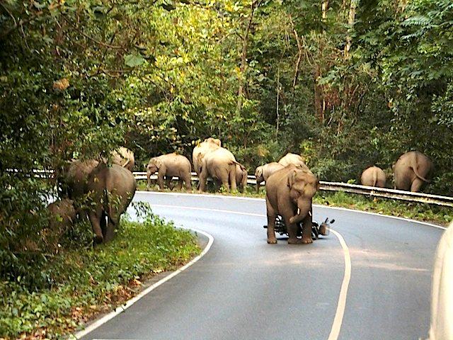 Elefant-Khao-Yai-Nationalpark