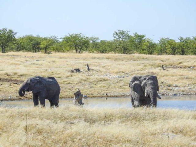 Elefanten-Olifantsbad-01