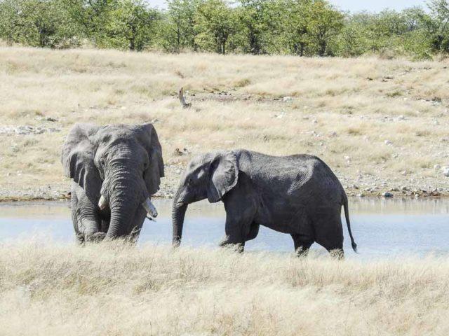 Elefanten-Olifantsbad-02