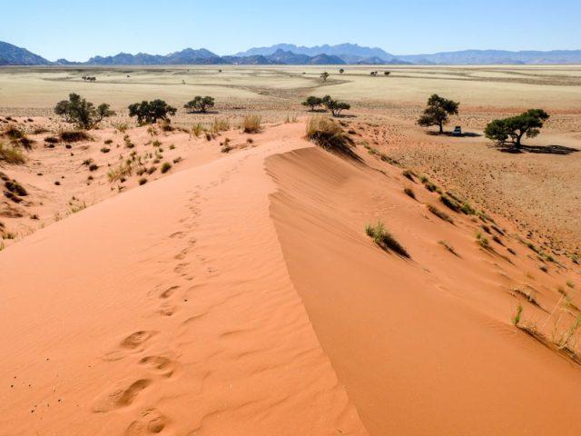 Elim-Dune-05