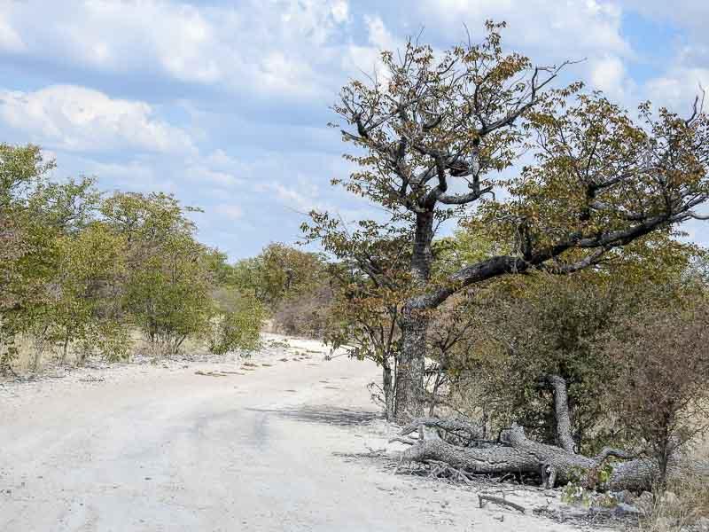 Etosha-Eland-Drive