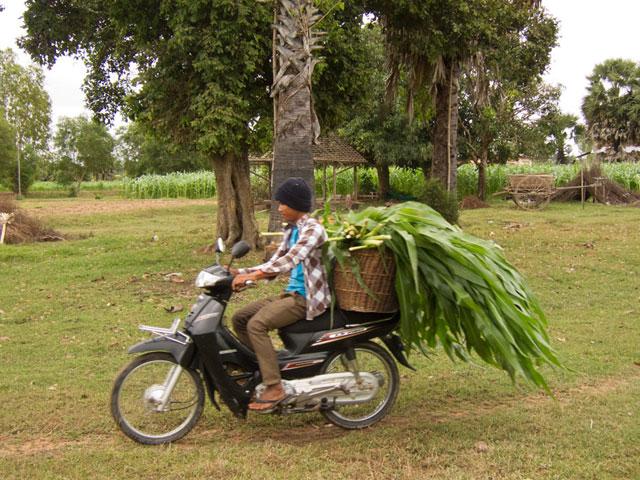 Fahrradtour-in-Kambodscha_Ernte-auf-Motorroller_SOMEWHERE_ELSE