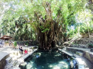 Siquijor Old Enchanted Balete Tree