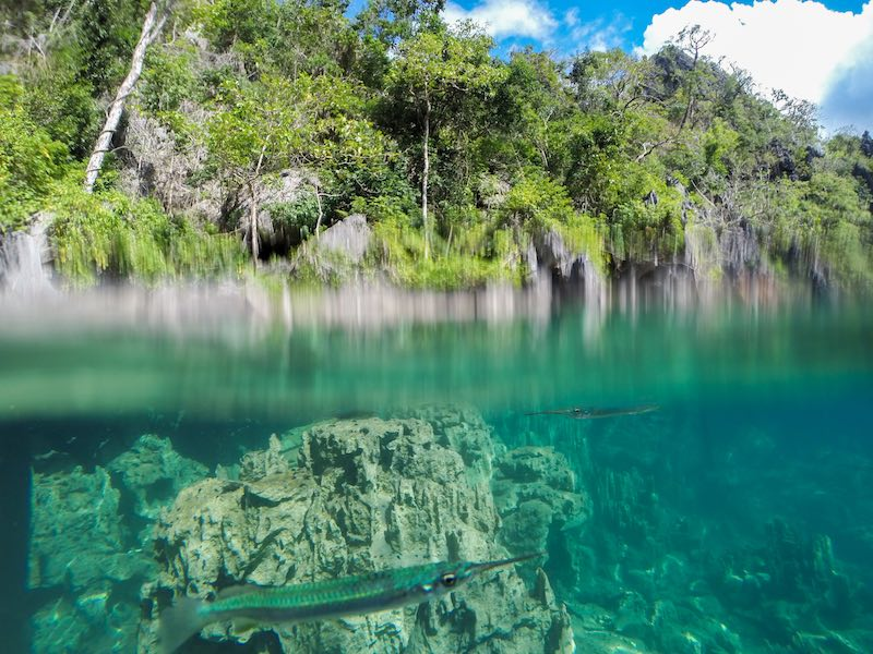 Coron Island Hopping Tour A Kayangan Lake