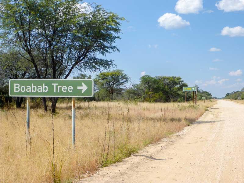 Grootfontein-Baobab-Tree-02