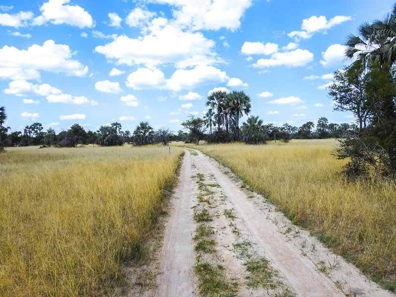 Grootfontein-Baobab-Tree-03