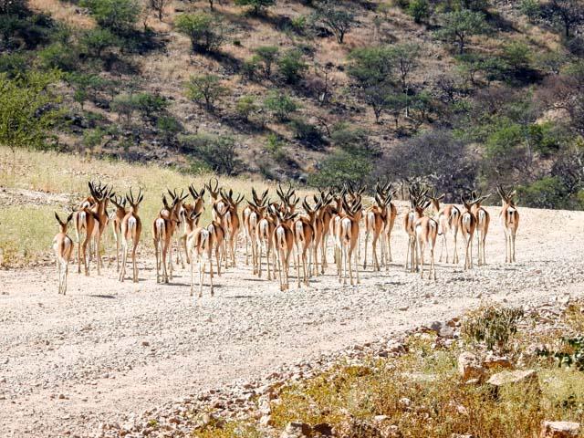 Impalas-joubert-berge