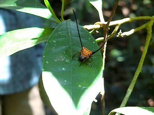 Kaefer-Khao-Yai-Nationalpark