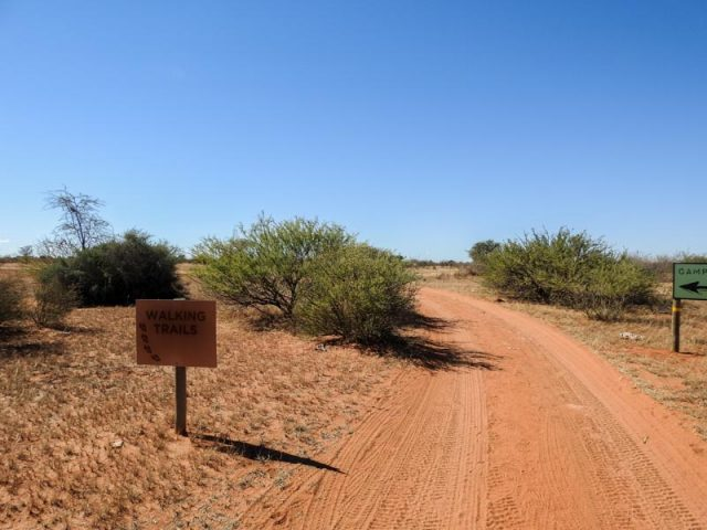 Kalahari-Waking-Trail-03
