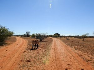 Kalahari-Waking-Trail-04