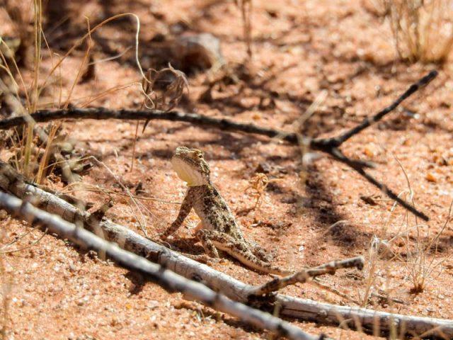 Kalahari-Waking-Trail-05