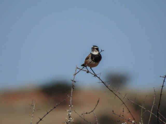 Kalahari-Waking-Trail-06