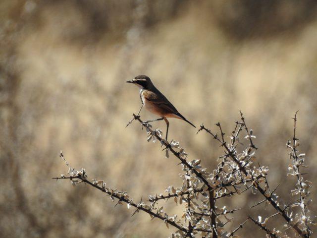 Kalahari-Waking-Trail-07