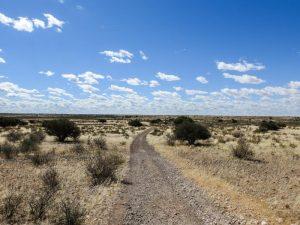 Kalahari-Waking-Trail-08