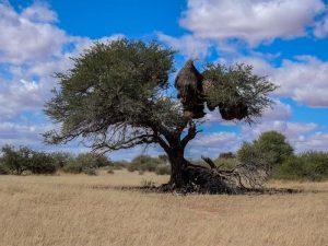 Kalahari-Waking-Trail-09
