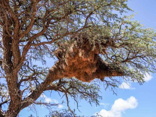 Kalahari-Waking-Trail-11