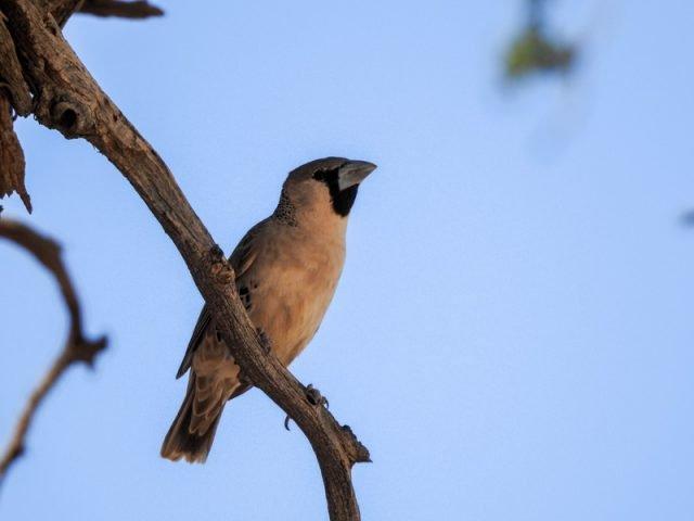 Kalahari-Waking-Trail-12