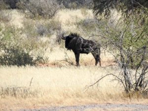 Kalahari-Waking-Trail-14