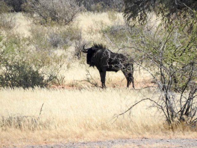 Kalahari-Waking-Trail-14