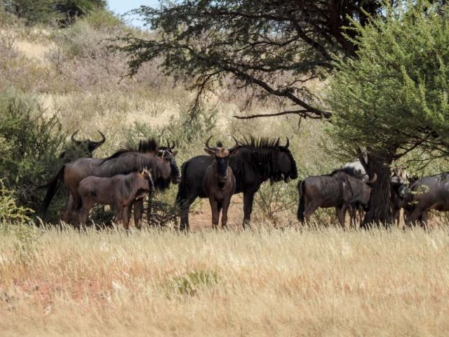 Kalahari-Waking-Trail-15