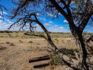 Kalahari-Waking-Trail-16
