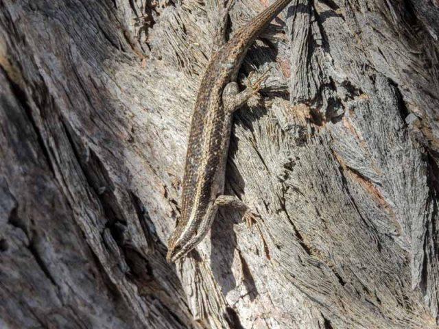 Kalahari-Waking-Trail-17