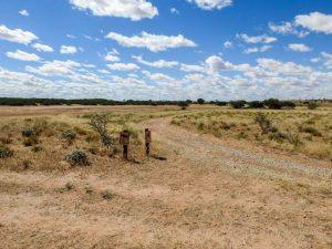 Kalahari-Waking-Trail-18