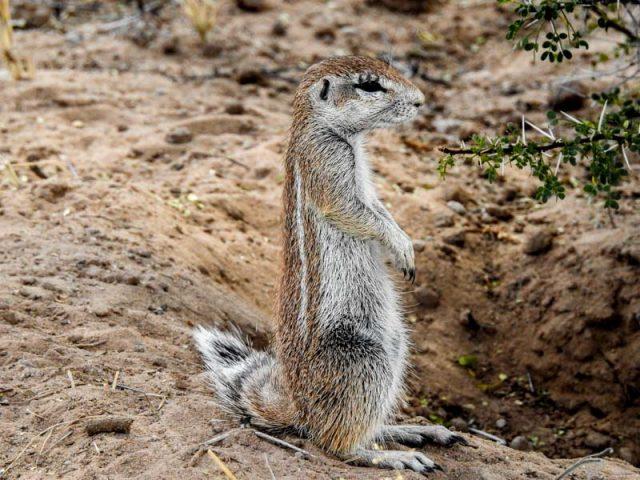 Kalahari-Waking-Trail-19